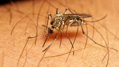 Was Hilft Wirklich Gegen Mücken Und Co? Test: Autan Protection Plus, Anti-Brumm-Forte, Nobite, Mückenarmbänder