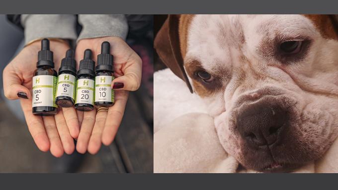 Test: Hempamed CBD Öl | Oder: Wie Ich Für Lotti Zum Cannabis-Fan Wurde